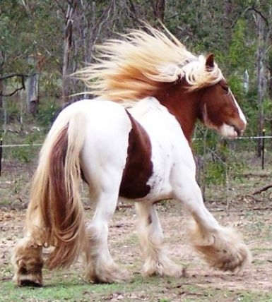 Horse breeds a z with pictures