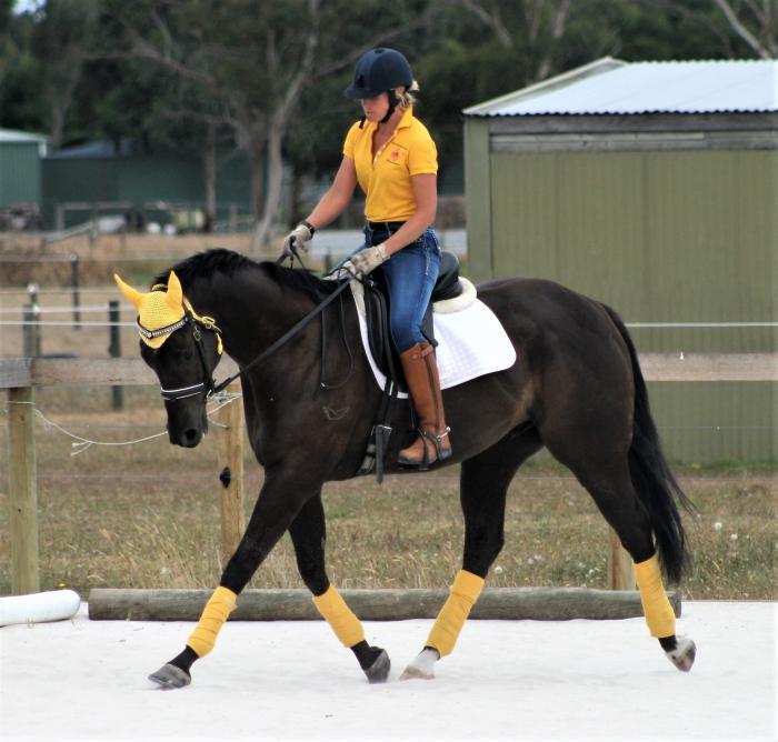 SUPER GENUINE BOY (Diamond Equestrian Jimbaroo)