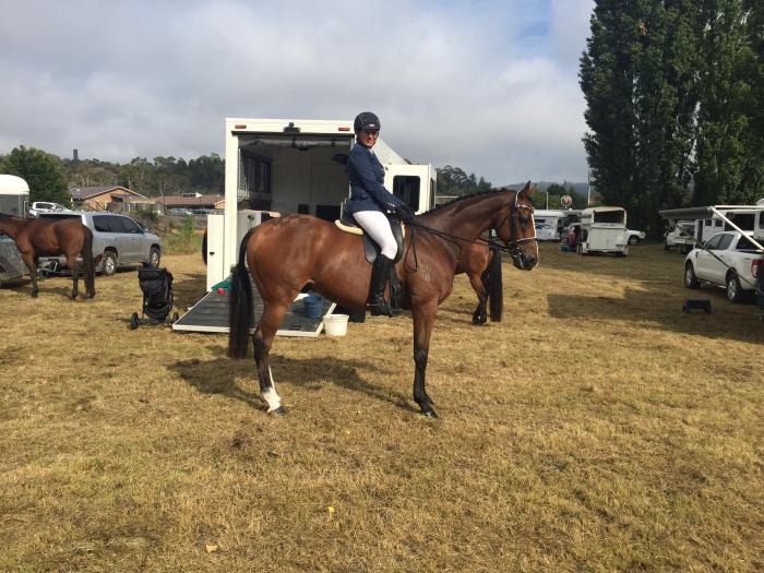 """Price Reduced"" Quality TB Gelding"