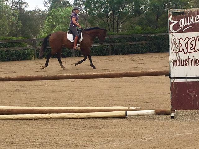 Stunning and Quiet TB Gelding