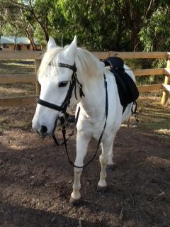 Stunning bomb proof pony