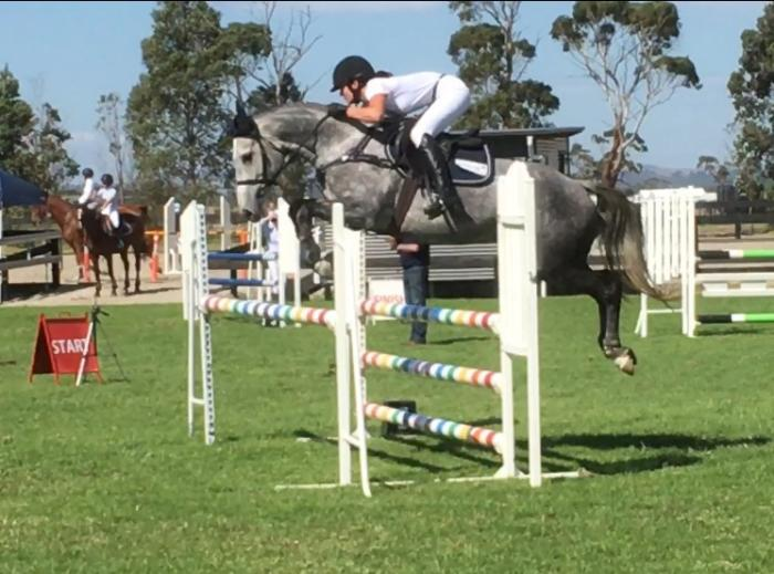 Dream horse - safe, talented and great temperament