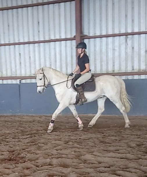 Ajax - cool pony, Loves to Jump