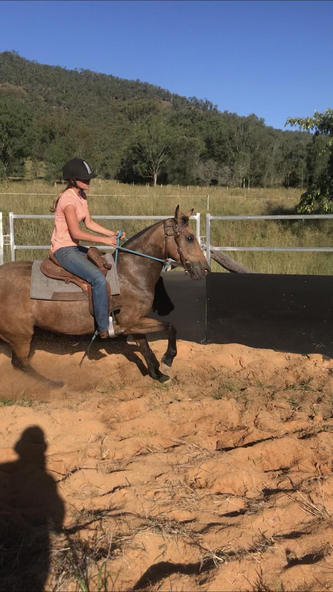 Maple buckskin mare