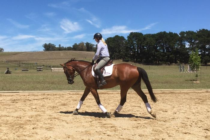 Stunning 4yo Gelding with beautiful paces