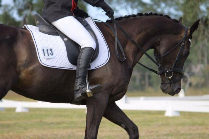 Attractive TB mare