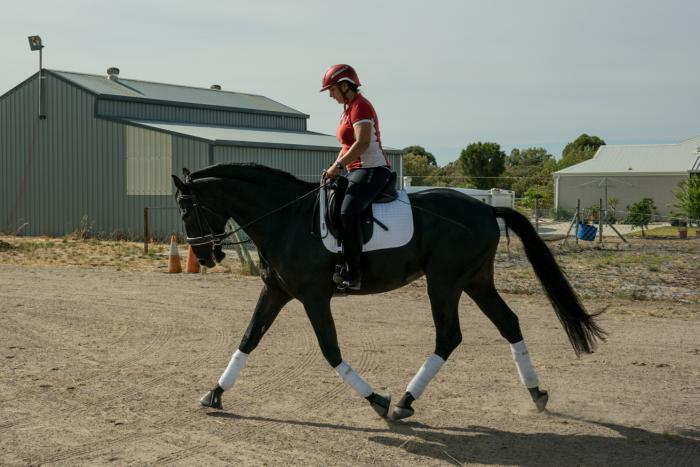 TALL PRE BLACK STALLION FOR AMATUER OWNER