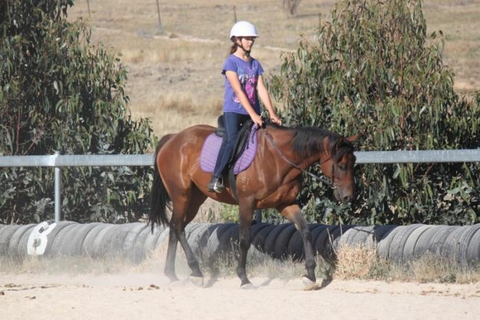 **PRICE REDUCED** ALLROUNDER