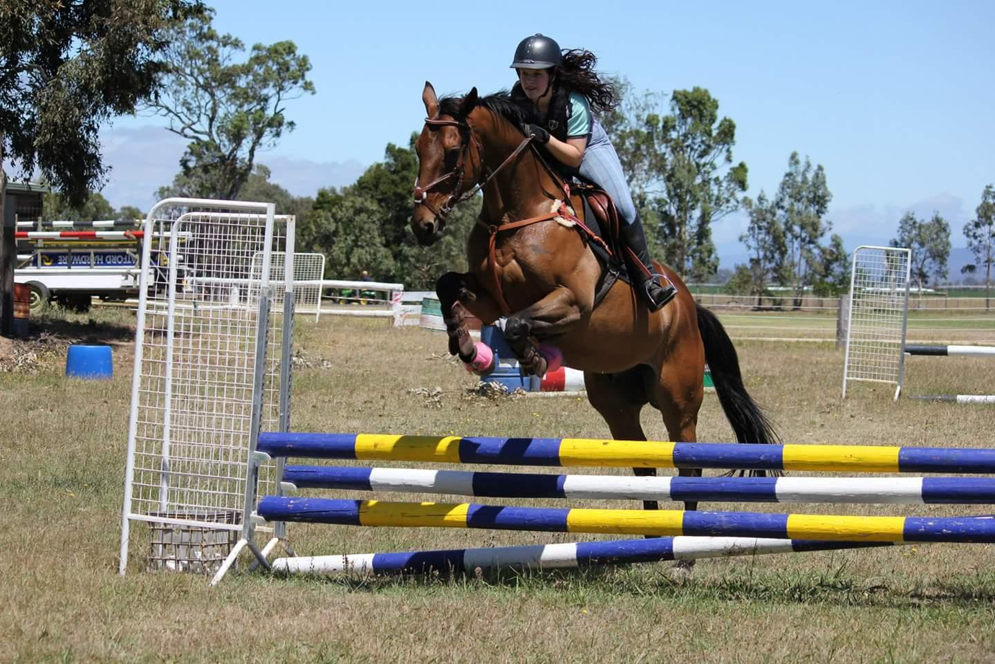 Showjumping/Eventing gelding