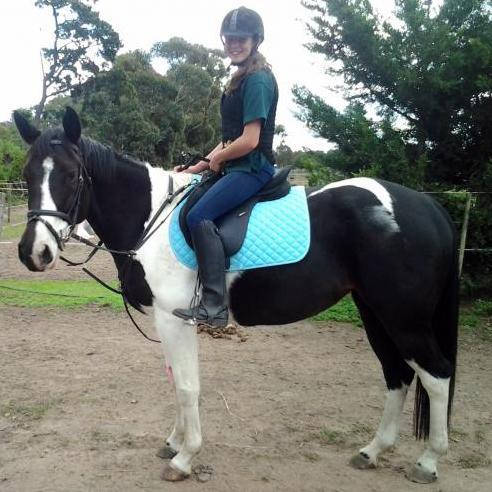 Coloured Quarter Horse Mare