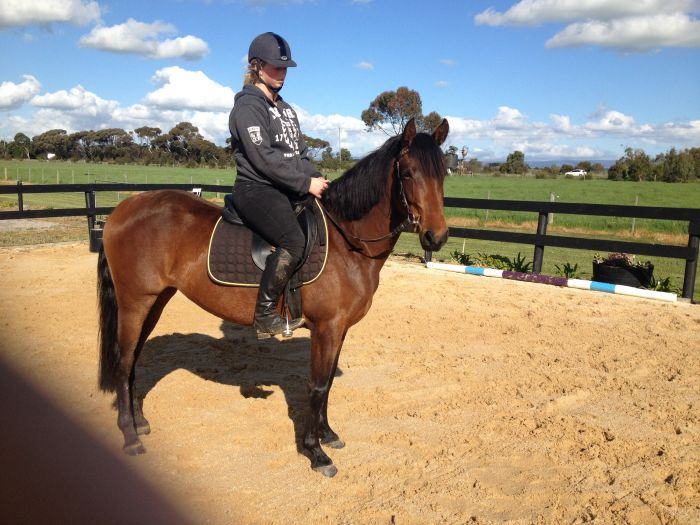 GORGEOUS 3YO THAT LOVES TO WORK AND LEARN!!
