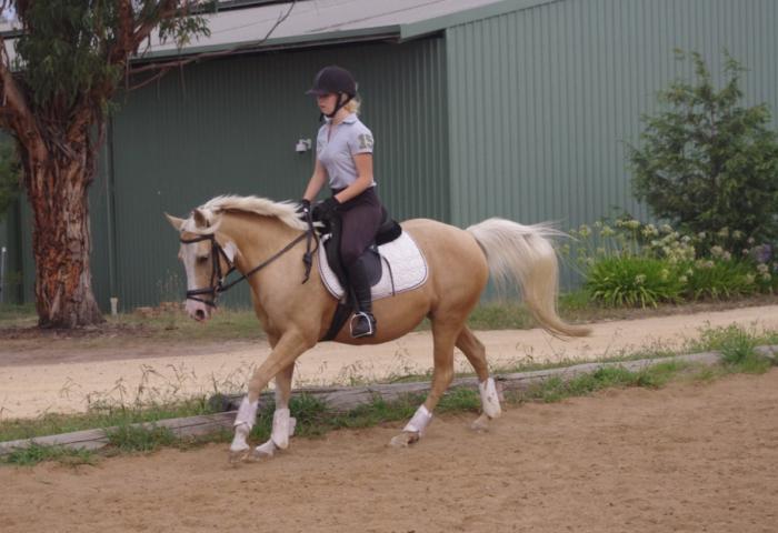 Super All-rounder Pony