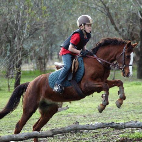Stunning Pony Mare
