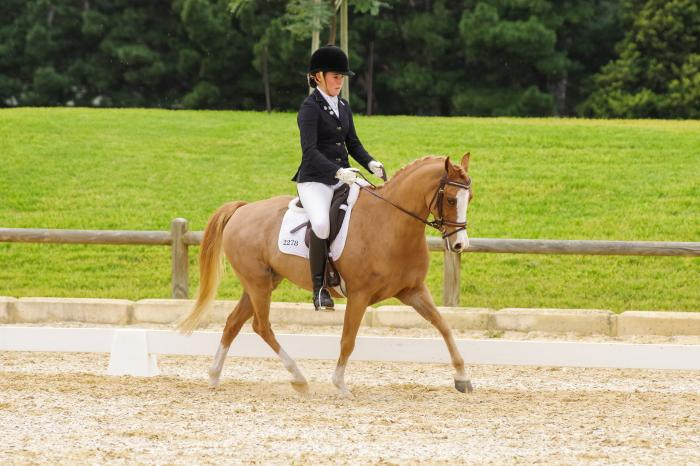 Pony Dressage Schoolmaster