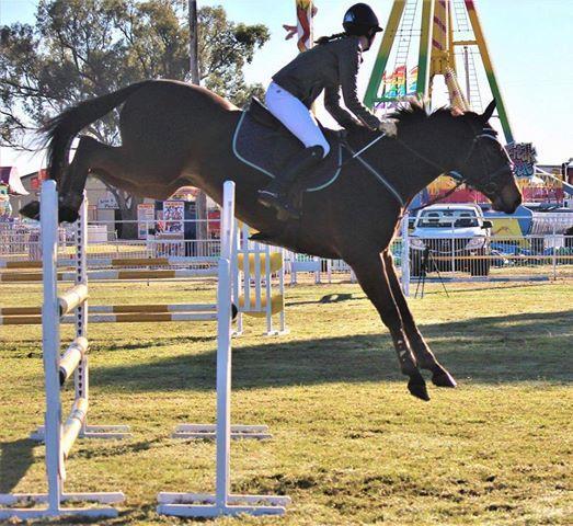 Ultimate Junior Horse!