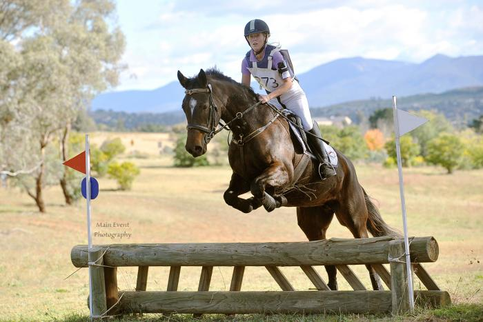 Camelot Mare - Will excel in jumping/eventing
