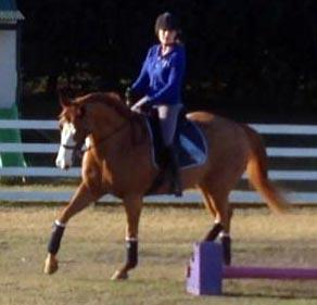 Potential Plus!!  15.1hh Stock x Quarter Horse