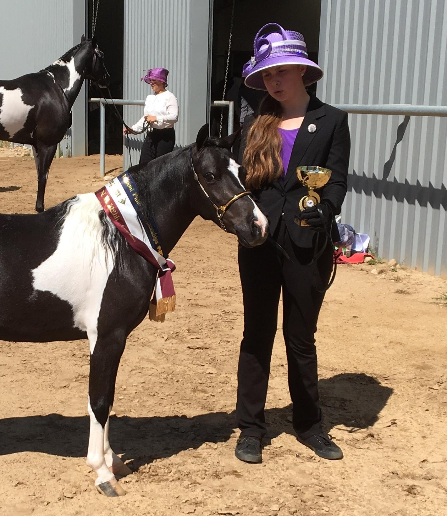 Outstanding Little Horse Gelding