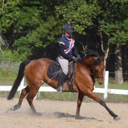 Fantastic all-rounder 7 yr old Mare TB/QH