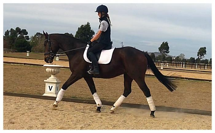 Ready to shine, 7 yo, thoroughbred gelding
