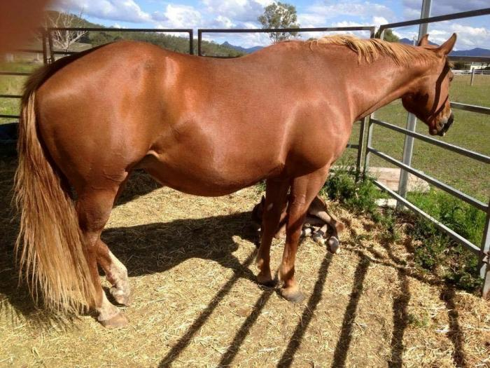 Proven producing mare PTIF to Smoochin* make offer