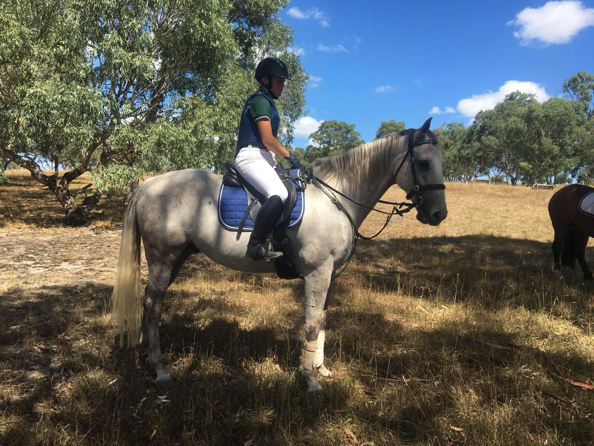 Beautiful Quarter horse gelding