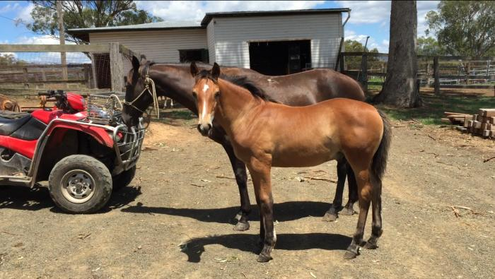 stockhorse 3 in 1 package