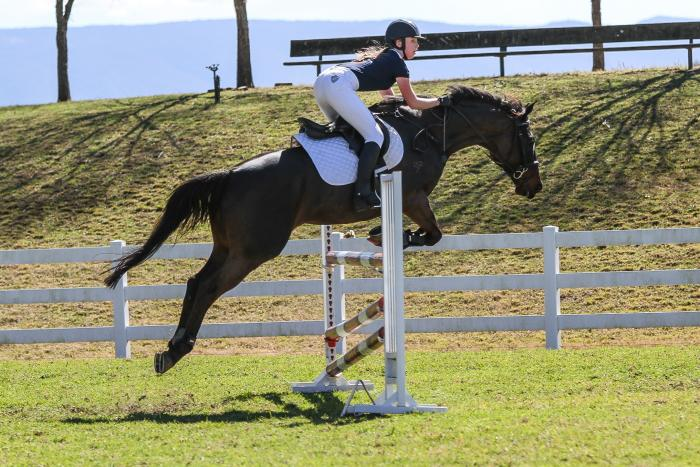 Seriously Talented Showjumper - Price reduced