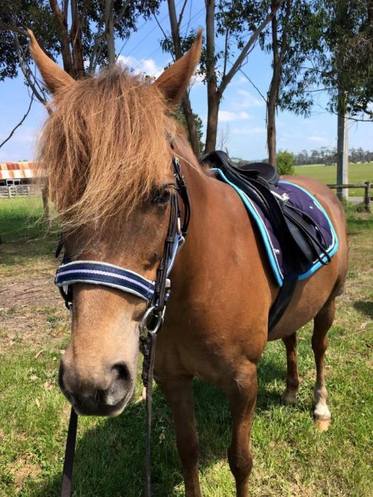Riding Pony X