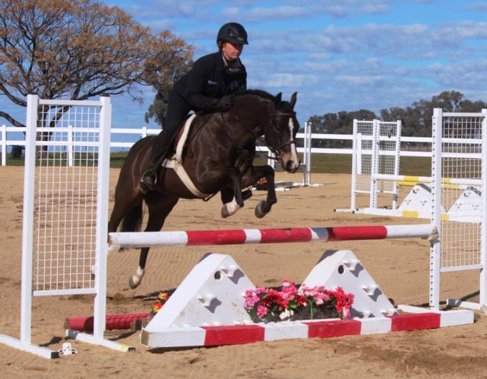 Superstar pony jumper / show pony / interschools