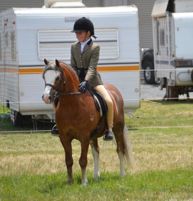 Seasoned Show Pony