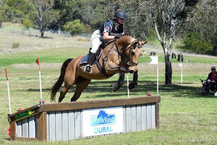 Allrounder Stockhorse