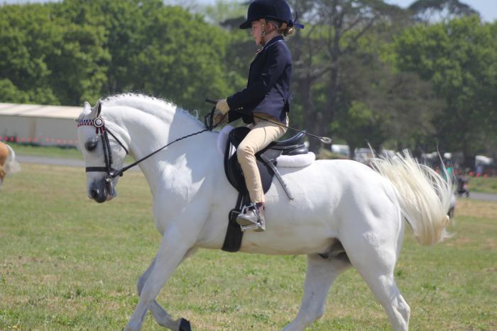 Amazing child's pony