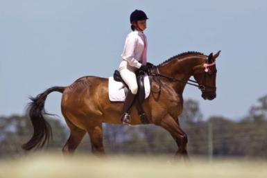 Dressage Test 2 - Hawkesburry