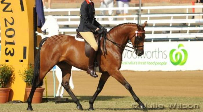 *PRICE REDUCED* Beautiful Mare