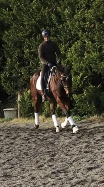 15.1 h TB mare 13 yrs old