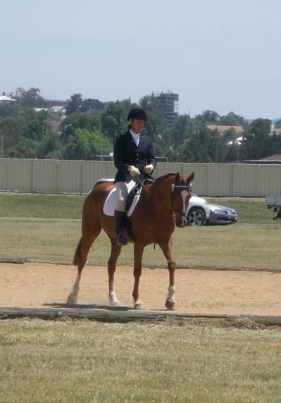 Super Quiet TB Gelding. One for the whole family!