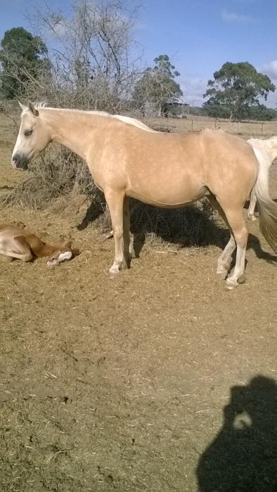 Amaranda Angel and filly foal