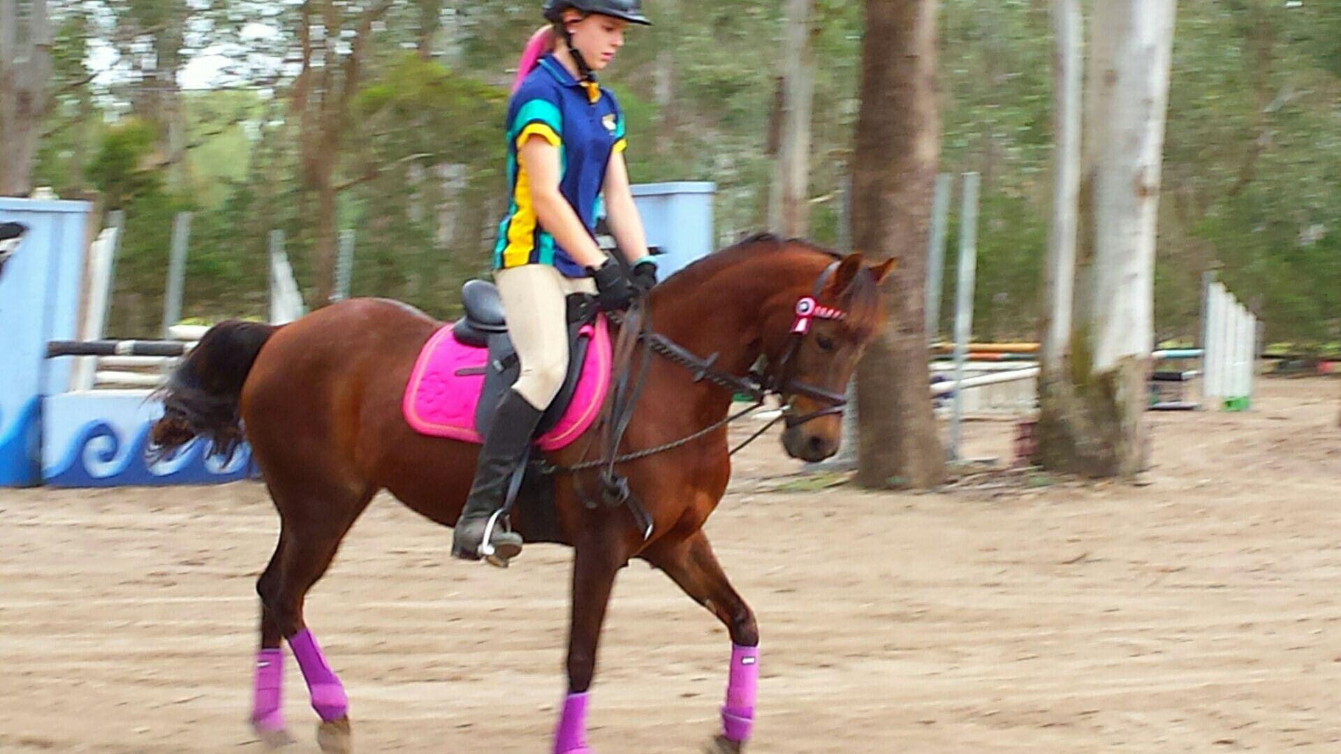 Arabian riding Pony 12.3h