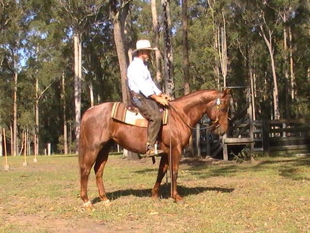 Reg Quarterhorse gelding