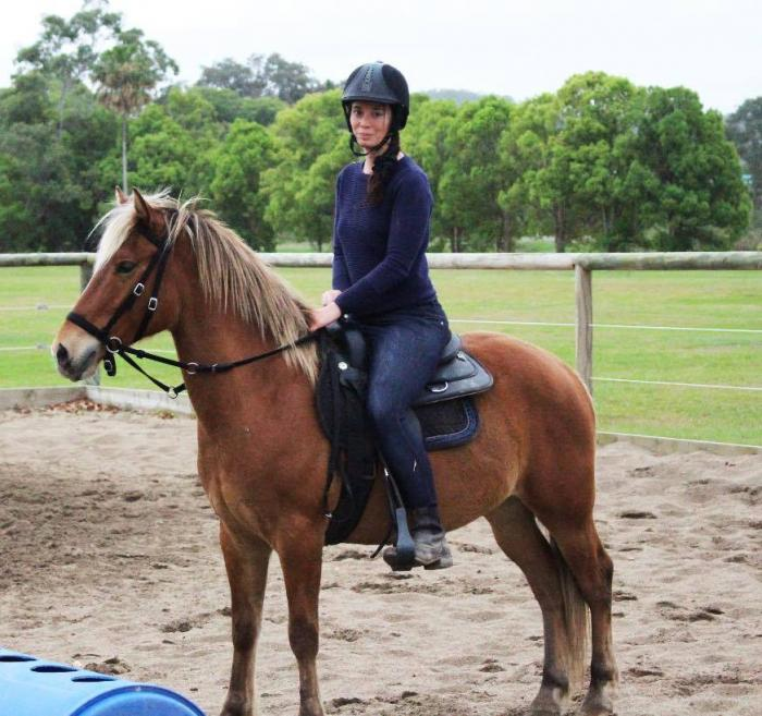 4 y/o Flaxen Liver Chestnut Pony Gelding