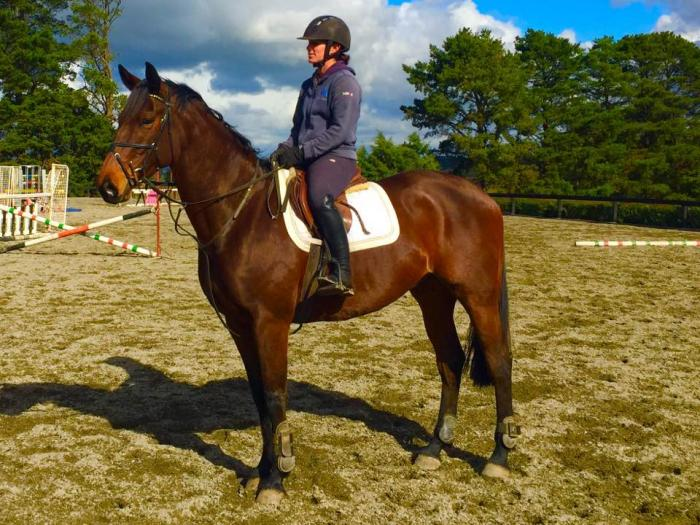 Flash Young Warmblood Eventer