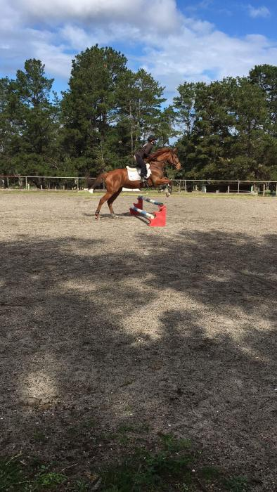 SALE OR FREE LEASE 9yr old UNRACED Thoroughbred