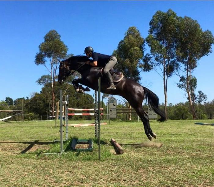 Talented young Jumping prospect ready to GO!