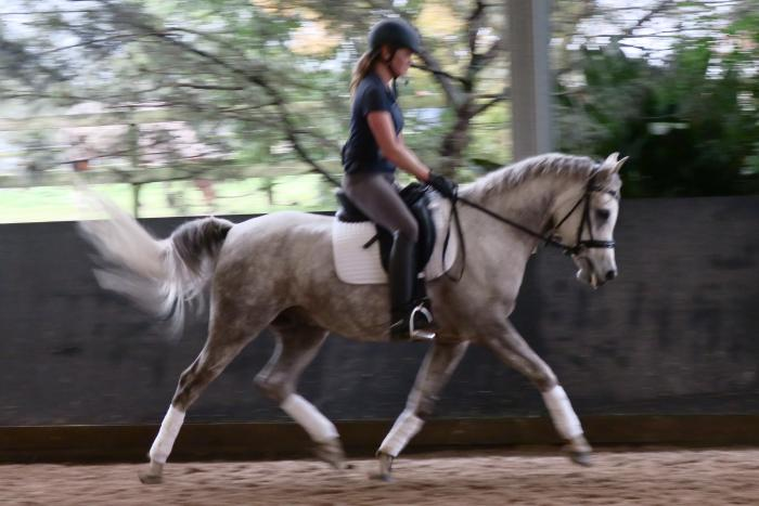6yo Dressage Gelding - Fun & Competitive
