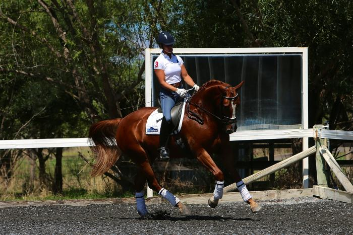 Spectacular 4yo Young Horse Candidate