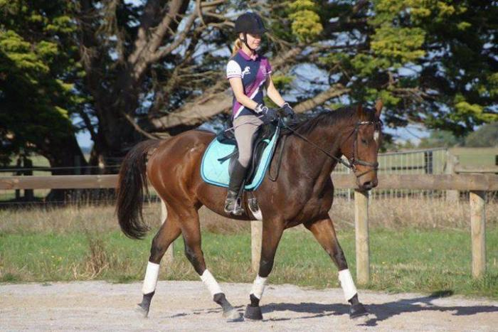 'Final Arrow' - 16hh, rising 6yo TB Gelding