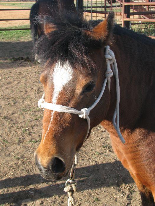Gypsie - 8 yr old Pony Mare