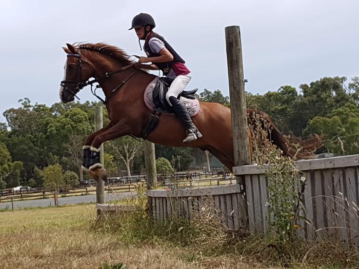 Galloway/Dressage /ponyclub