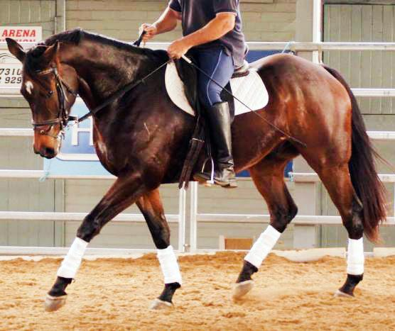 TRT Martini - Serious Eventing Potential